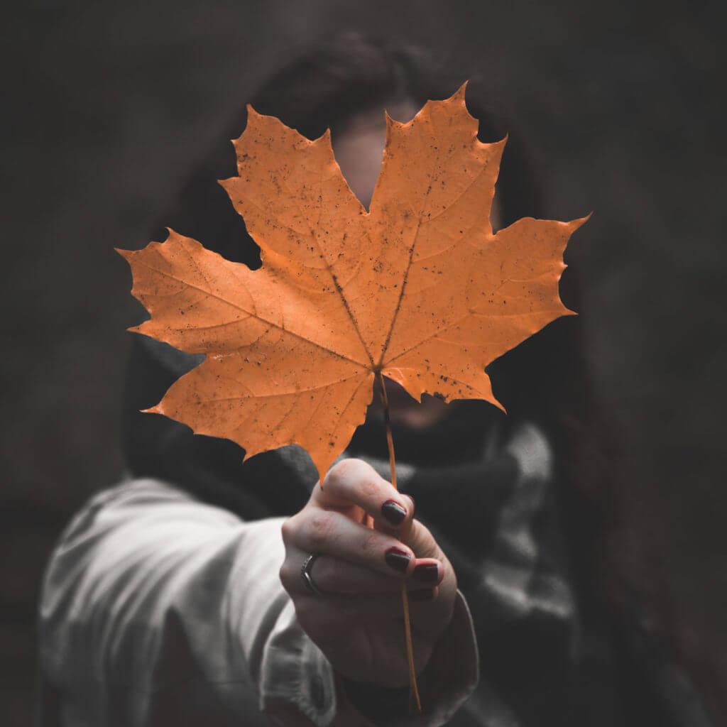 Deine Herbstfotografie mit einen einfachem Fade Look aufbessern.