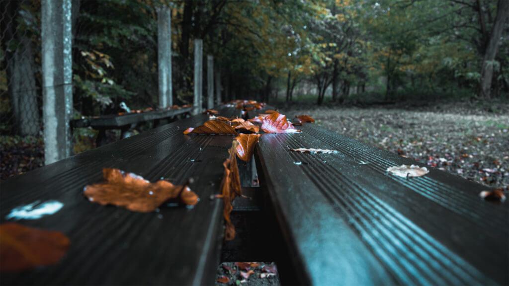Herbstfotografie nach dem Regen.